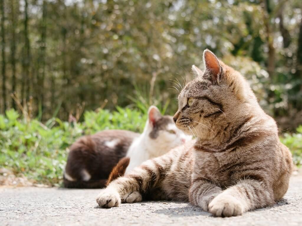 Viajes felinos