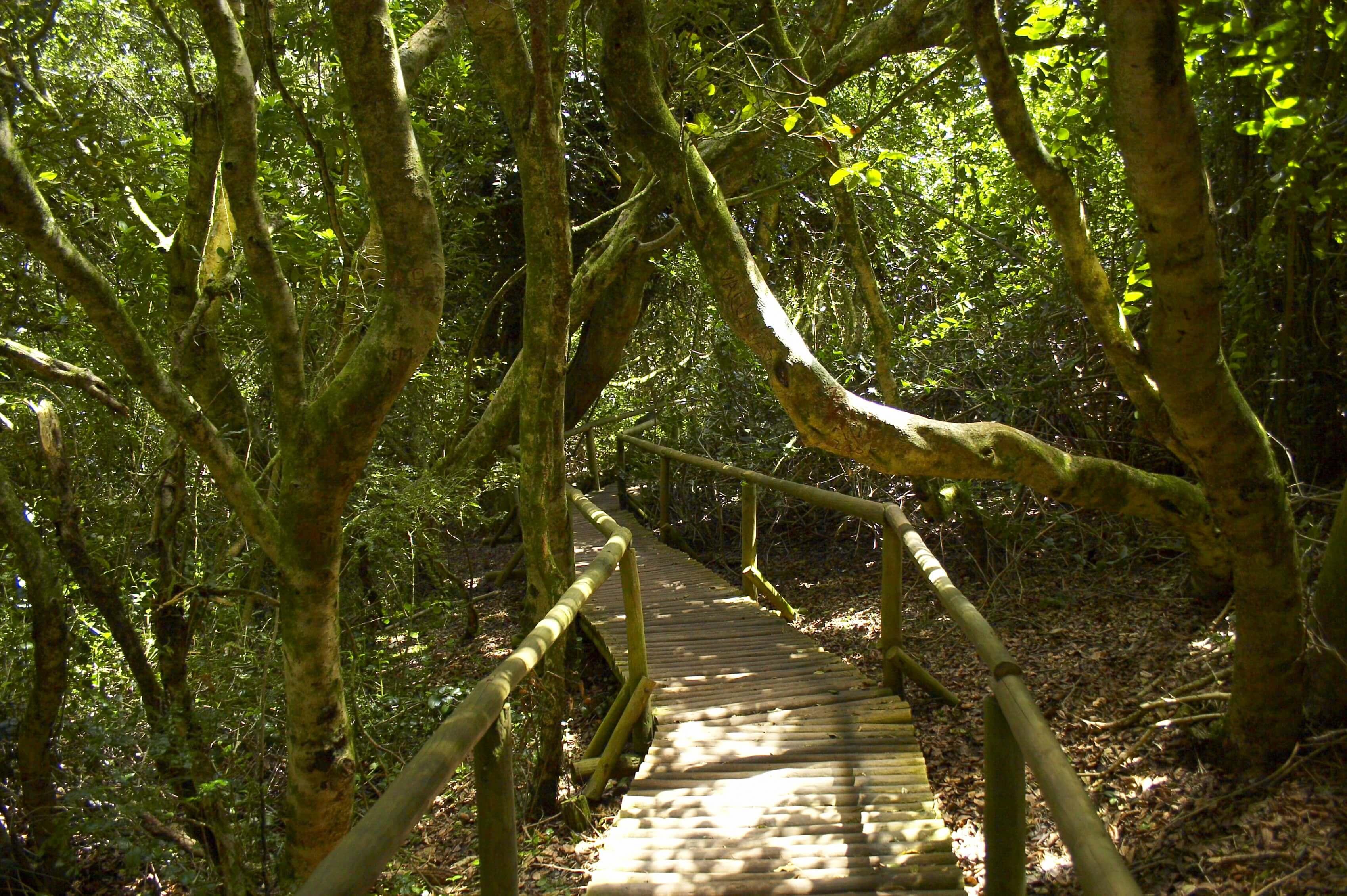 Parque Nacional Bosque Fray Jorge - Sueños Viajeros