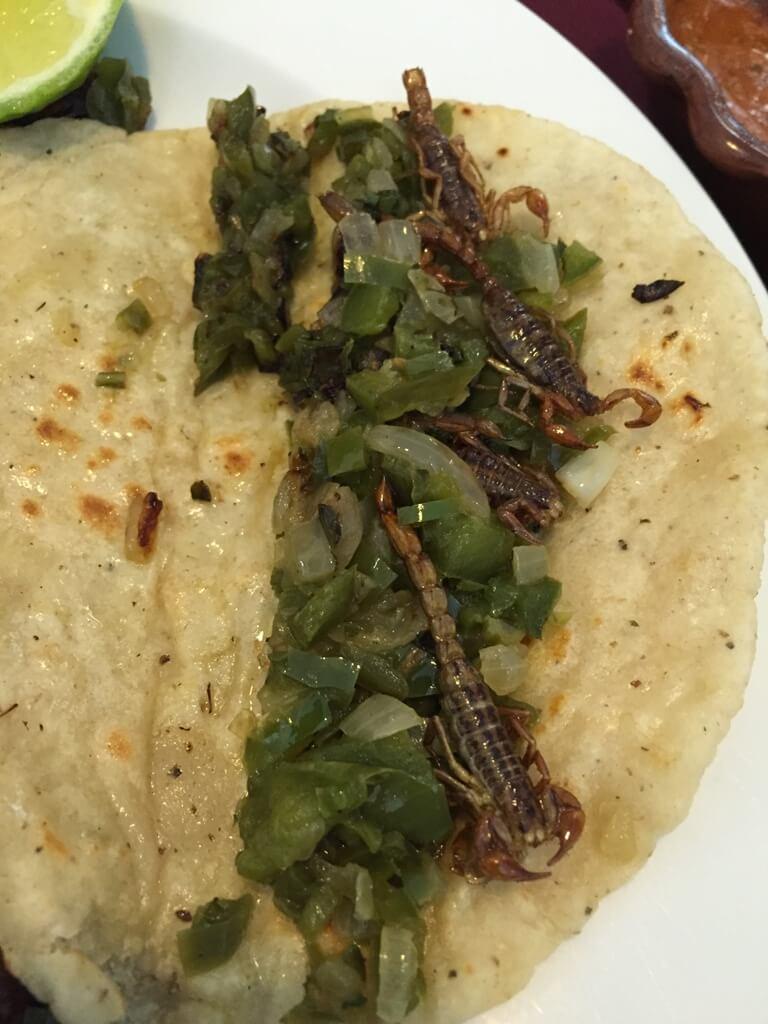 Comida con insectos en México