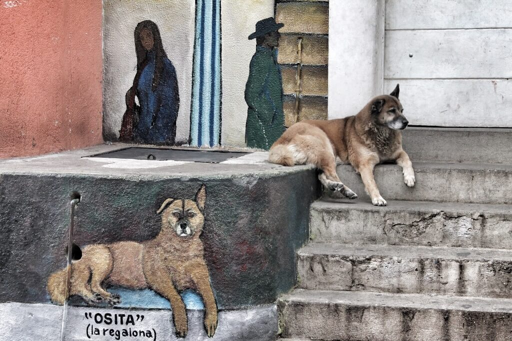 Perro en cerro Cordillera, Valparaíso, Chile