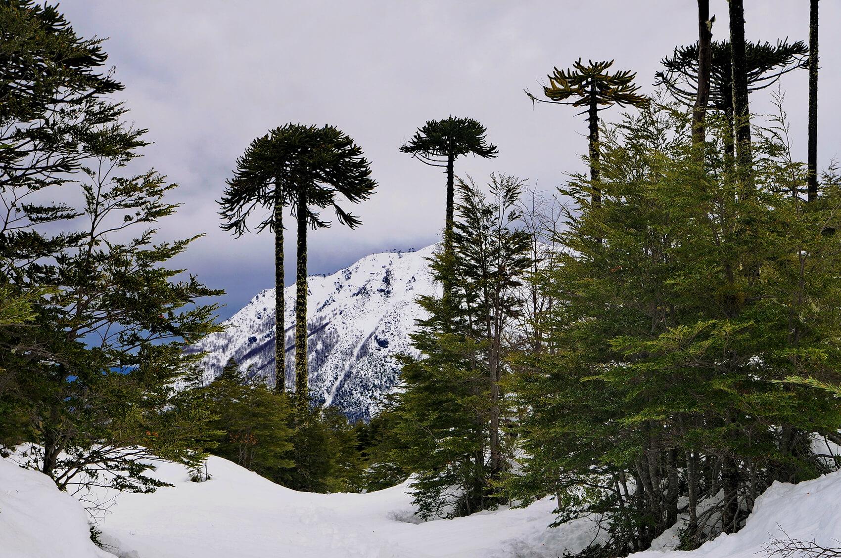 The Guardian destacó los diez mejores paisajes de Chile
