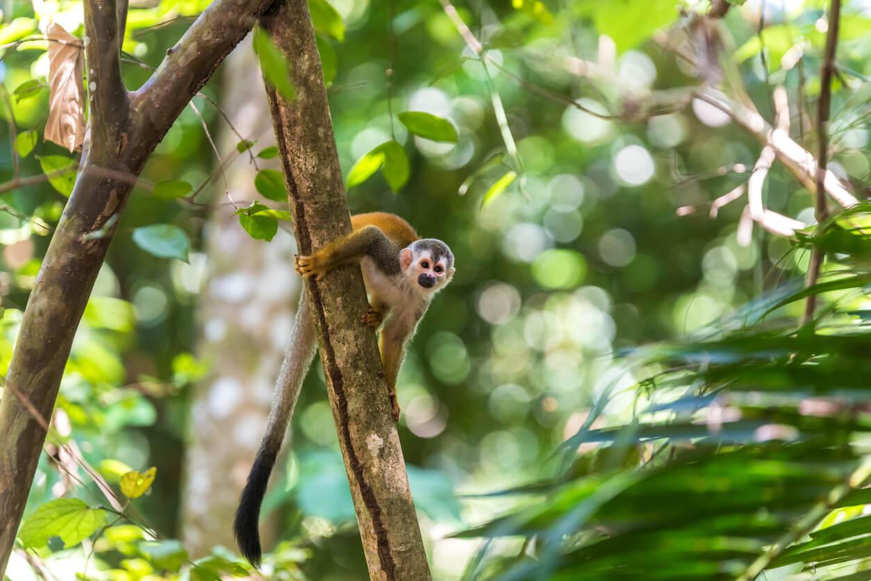 Mono en una rama