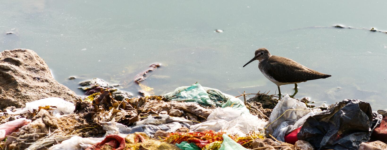 ¡Mira todo lo que puedes contaminar en cada viaje!