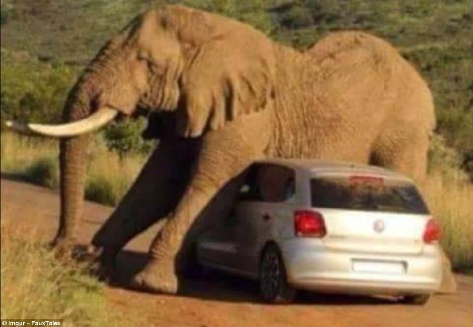 Elefante - Sueños Viajeros