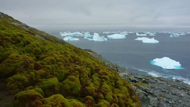Antártica verde