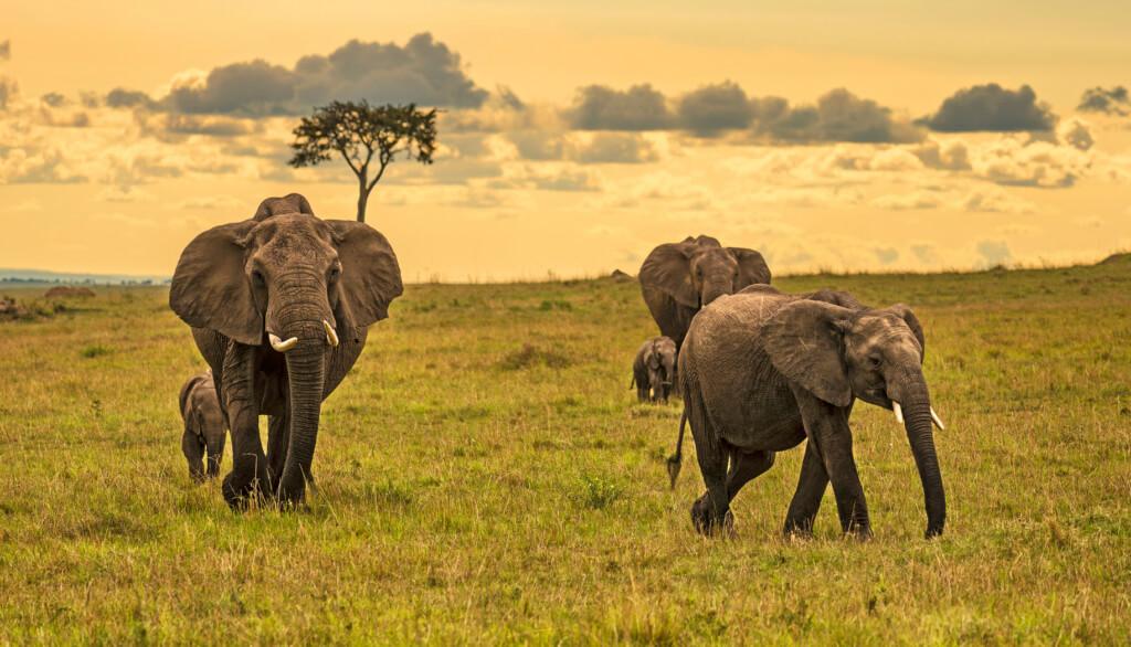 Parque Nacional Serengueti (Tanzania)