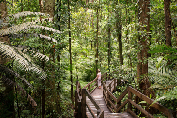 Parque Nacional Daintree, Australia