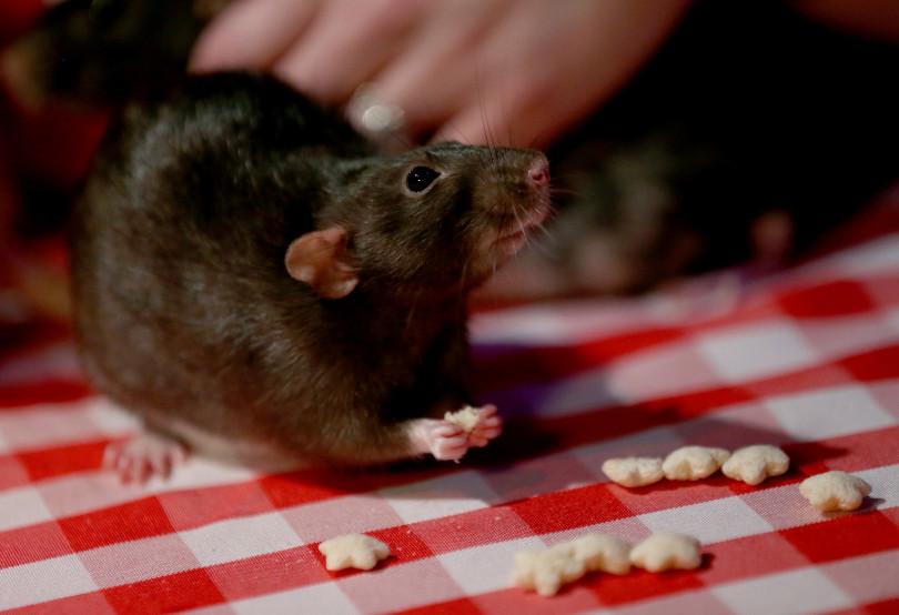 The Rat Cafe San Francisco, Estados Unidos