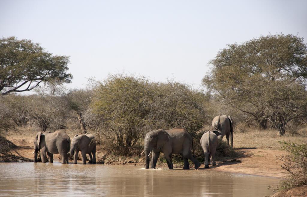 Elefantes en África - Sueños viajeros