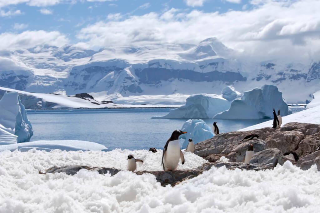Pingüinos en la Antártica - Sueños viajeros
