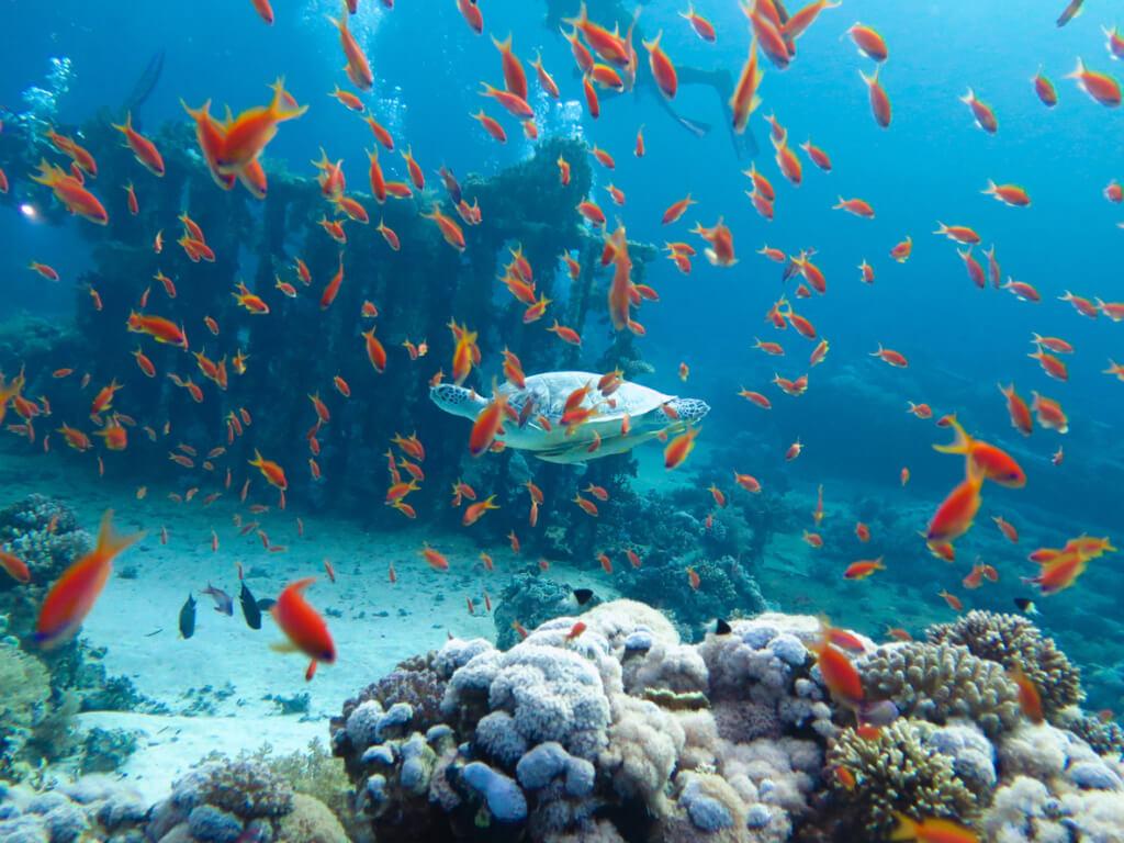 Las profundidades del mar Rojo - Sueños viajeros