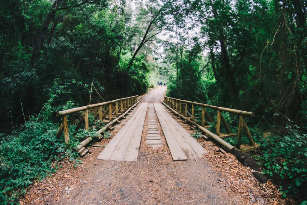 Reserva Nacional Nonguén- Sueños viajeros