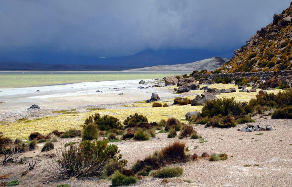 Reserva Nacional Las Vicunas - Sueños viajeros