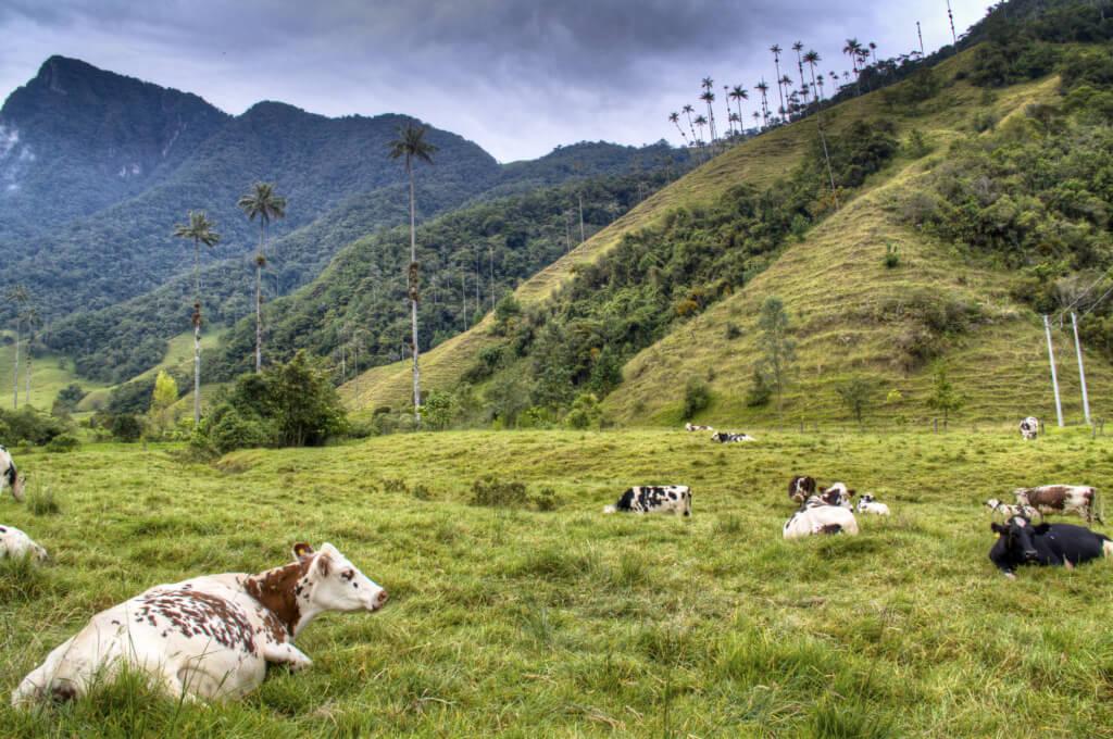 Valle de Cocora - Sueños viajeros