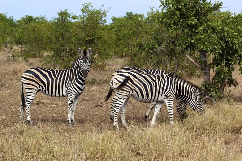 Sudáfrica - Sueños viajeros
