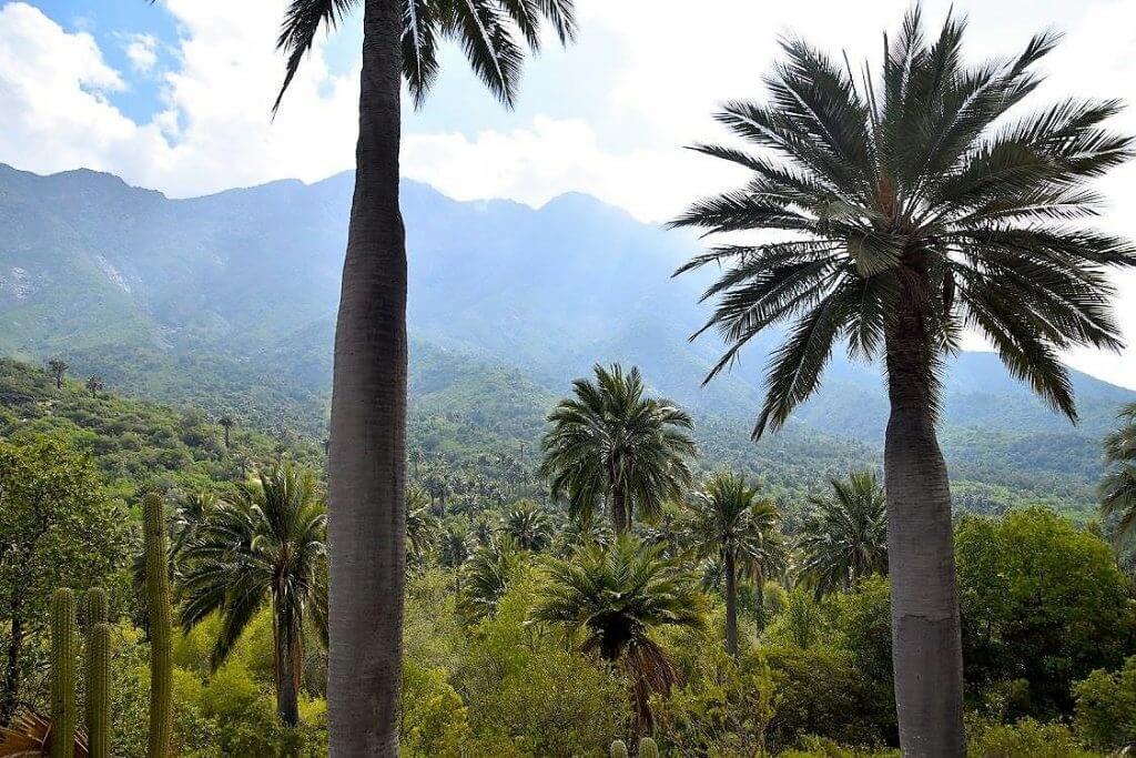 Parque Nacional La Campana - Sueños Viajeros