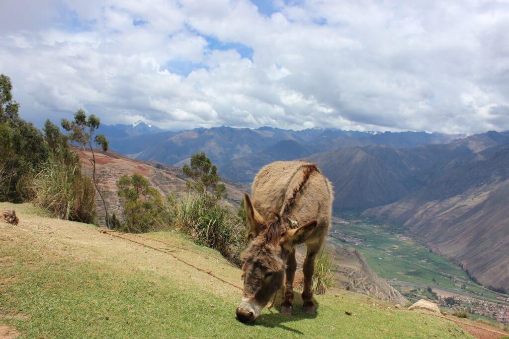 Urubamba, Perú - Sueños Viajeros