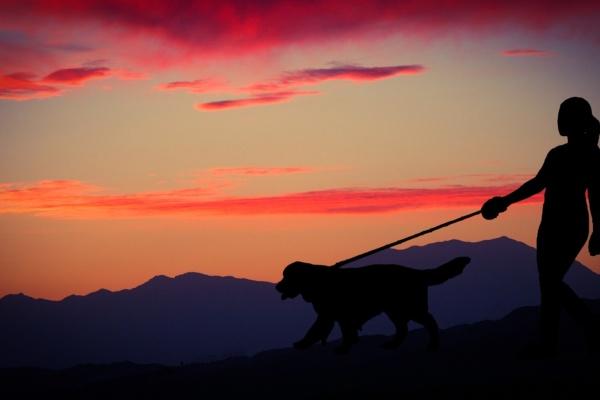 Viajar con perros - Sueños Viajeros