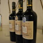 Viaje grupal Faro: ¡Buen vino y paseo por la viña Torreón de Paredes!