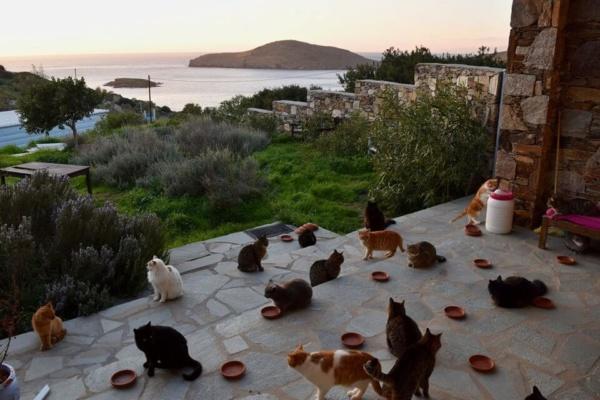 Gatos en la isla de Grecia - Sueños Viajeros