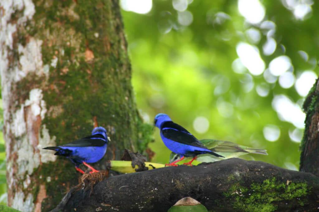 Avistamiento de aves en Chocó - Sueños Viajeros