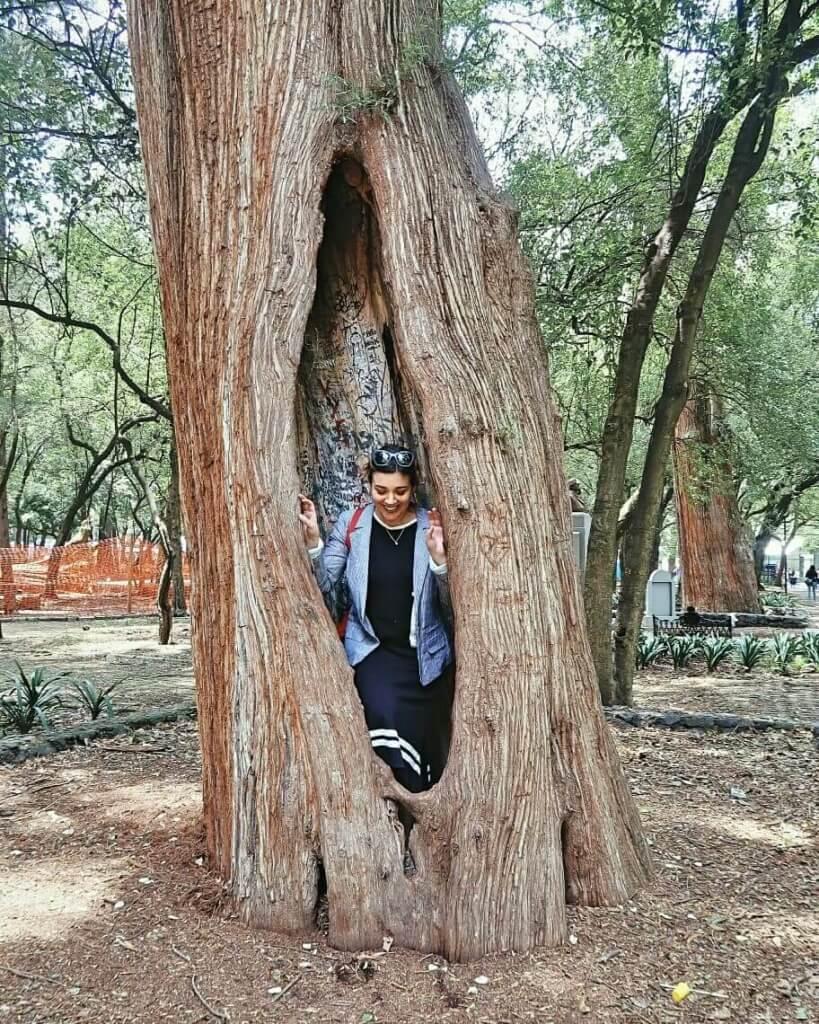 Árbol milenario en el Bosque de Chapultepec - Sueños Viajeros