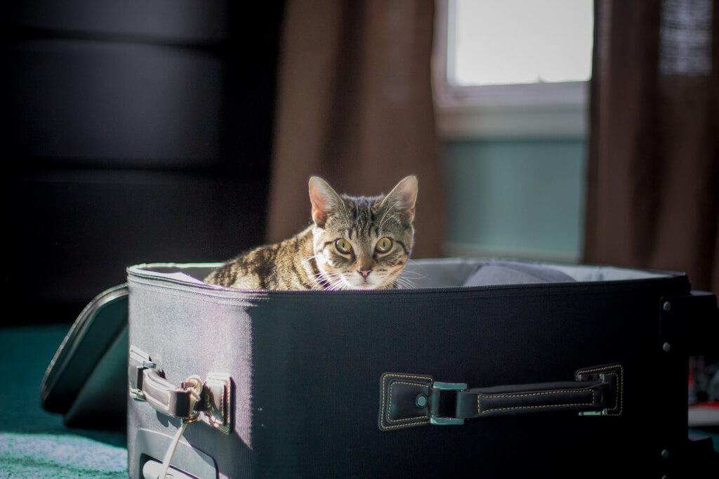 Gato en una maleta - Sueños Viajeros