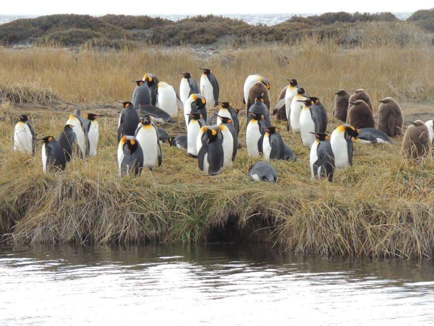 Parque Pingüino Rey - Sueños Viajeros