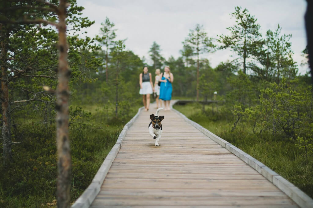 Viajar con mascota - Sueños Viajeros