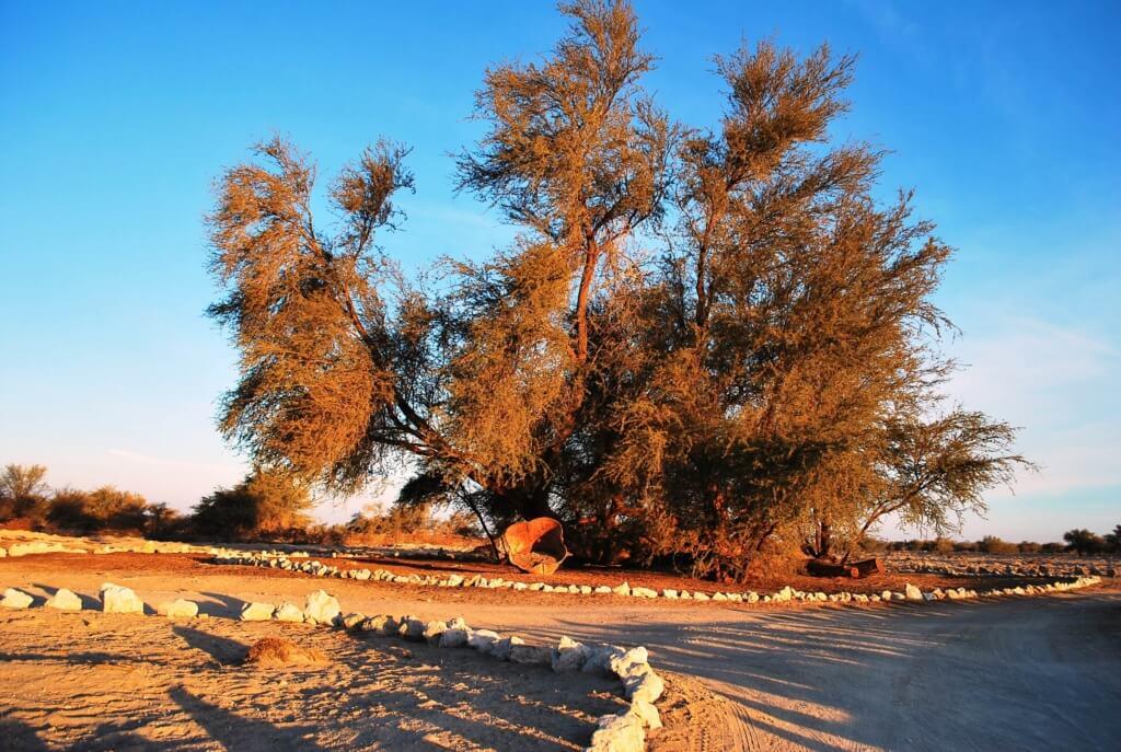 Bosque del Tamarugal - Sueños Viajeros