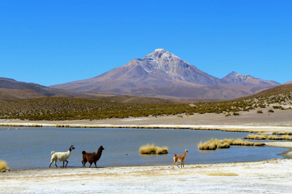 Parque Nacional Volcán Isluga - Sueños Viajeros
