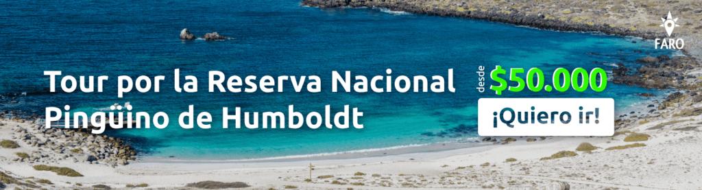 Reserva Nacional Pingüino de Humboldt - Sueños Viajeros