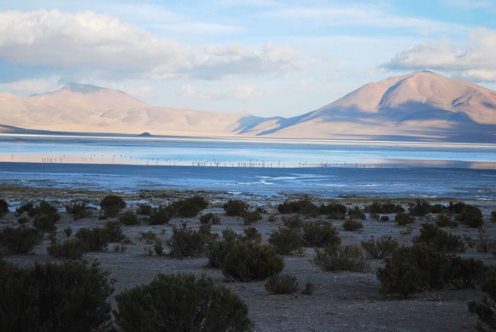 Humedal Salar de Huasco - Sueños Viajeros