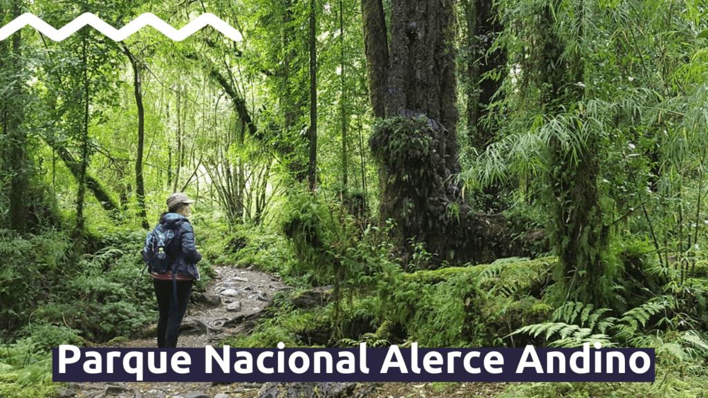 Parque Nacional Alerce Andino con Faro Travel