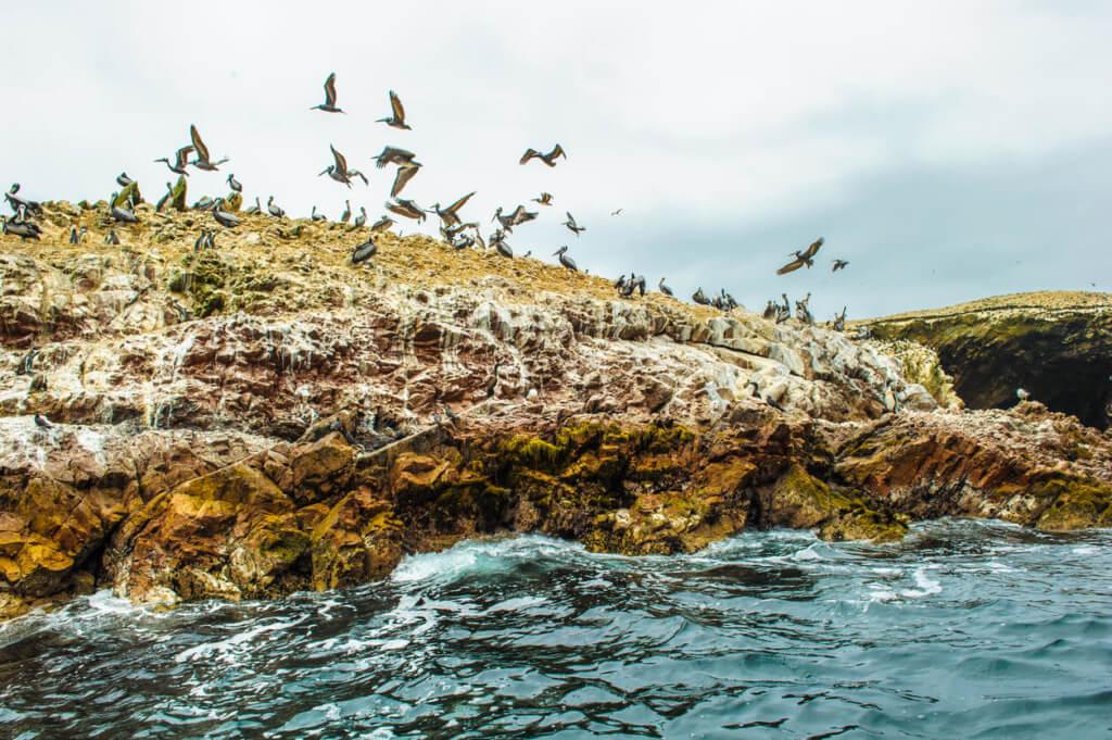 Islas Ballestas - Sueños Viajeros Faro Travel
