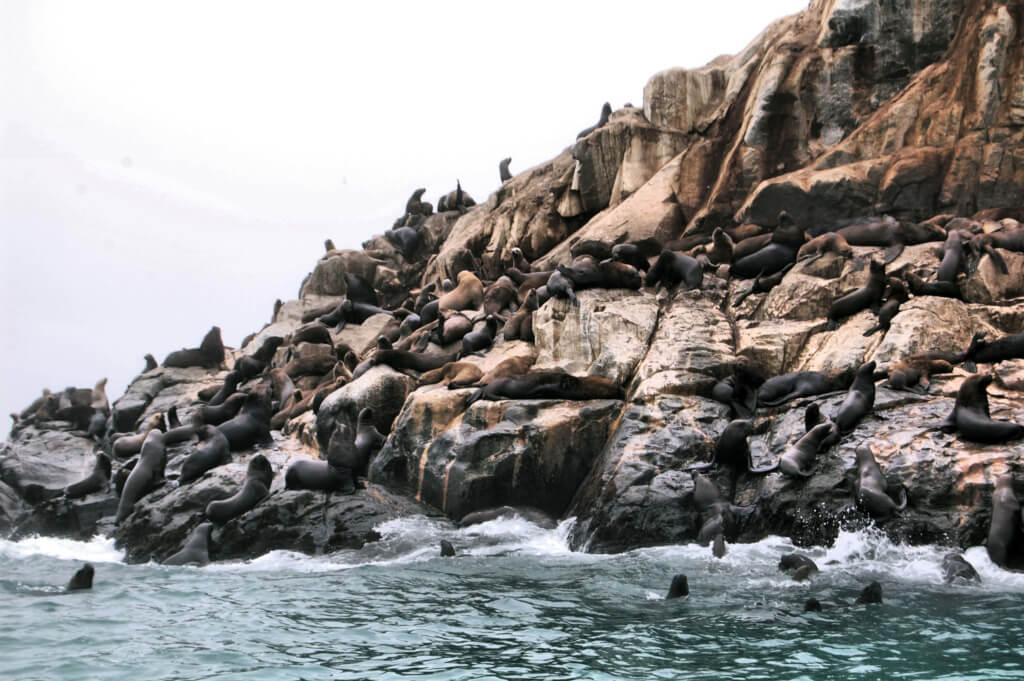 Islas Palomino - Sueños Viajeros Faro Travel